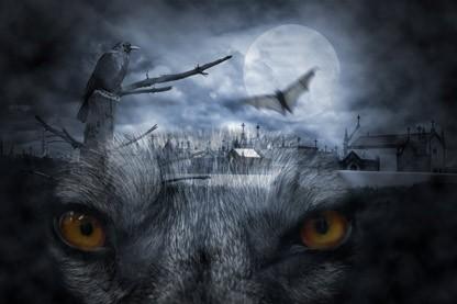 Wolfsaugen kontaktlinsen